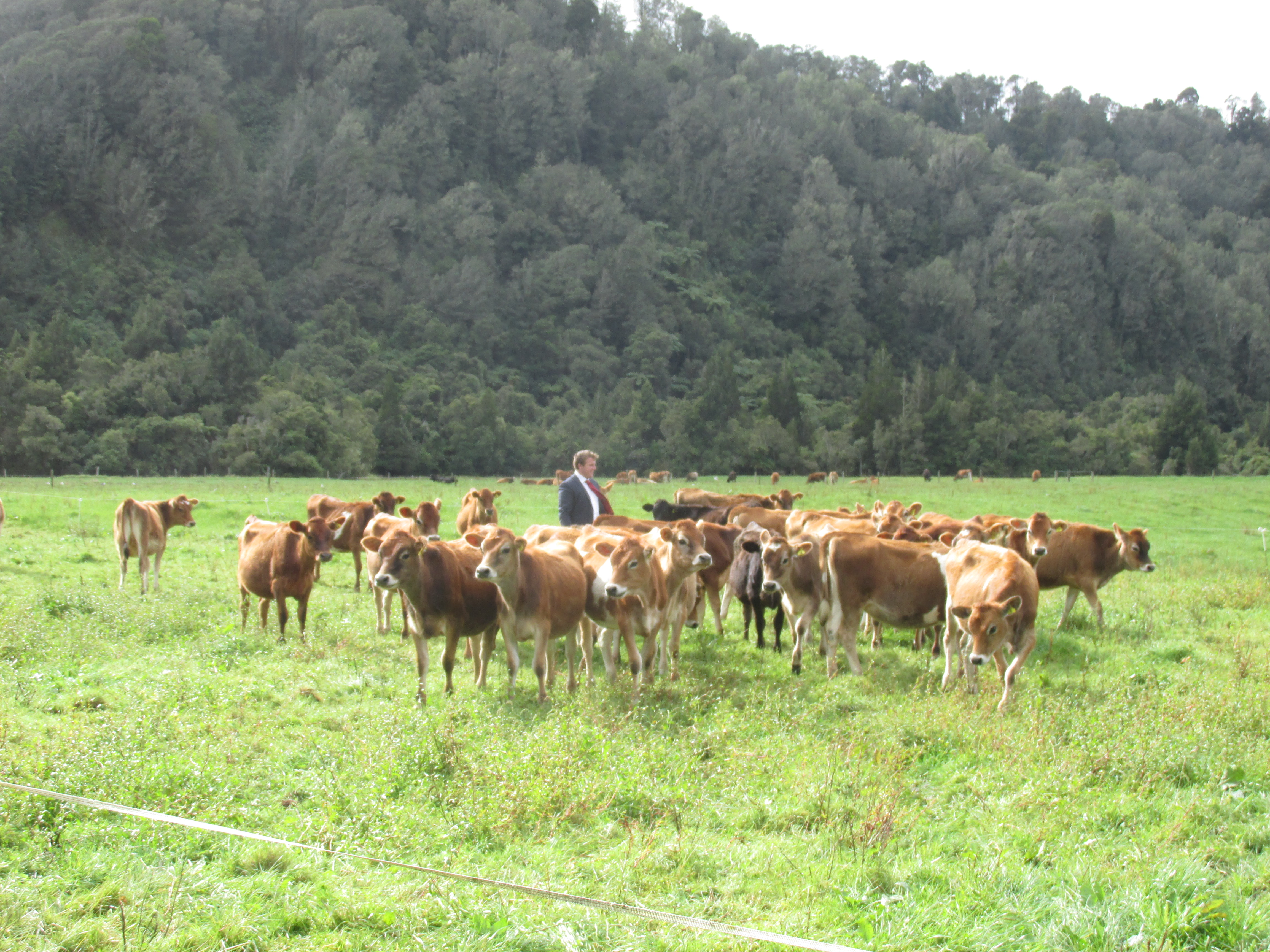 Karamea Jersey Breeders club On Farm Young Stock competition